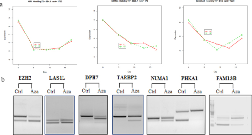 PcG (EZH2) mediated gene expression alteration and validation of exon-skipping events.(a) Differentially expressed PcG (EZH2) targeted genes induced by exon-skipping changes in EZH2. Aberrant exon recognition changes in EZH2 found in Day 5 and Day 9 resulted in corresponding inhibition of targeted genes. (b) Experimental validations of seven differentially expressed exon-skipping events after 5-Aza-CdR treatment.