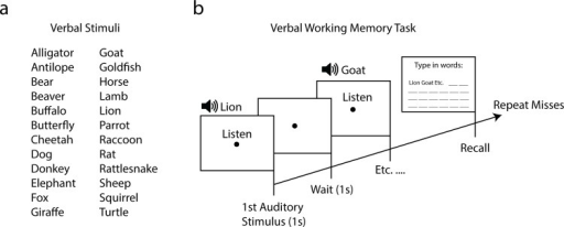Procedure and stimuli of verbal working memory task of experiment 3.A total of 24 verbal animal species (a) were read out in 2 second intervals (b). Next, the participant had to recall and type in all the names they remembered. Unrecalled words (misses) were read out again until the participant was able to recall all words or until they had gone through 4 trial iterations.