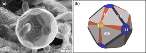 FE-SEM image of (a) single particle showing the different facets (b) schematic crystal shape created using the Wulffman freeware [37–38].
