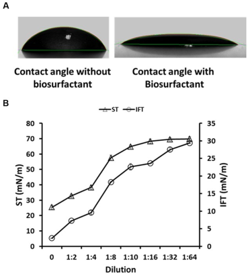 The contact angle of abiotic control medium – without biosurfactant (55.67 ± 1.6°), and W16 biosurfactant (19.54 ± 0.96°), on a hydrophobic surface (A) and the CMD determination for W16 biosurfactant (B).