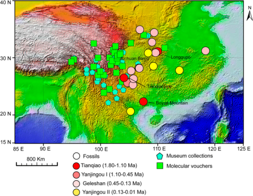 Distribution of the NASC as revealed by fossils, museum collections and molecular voucher specimens.Dots show fossil occurrences dating to different periods (represented by colour differences), blue pentagons show the locations of museum collections, and green squares show the locations of molecular voucher specimens. The presence data were mapped on the world topographic layer in ArcGis [9.0] (http://www.esri.com/software/arcgis/arcgis-for-desktop).