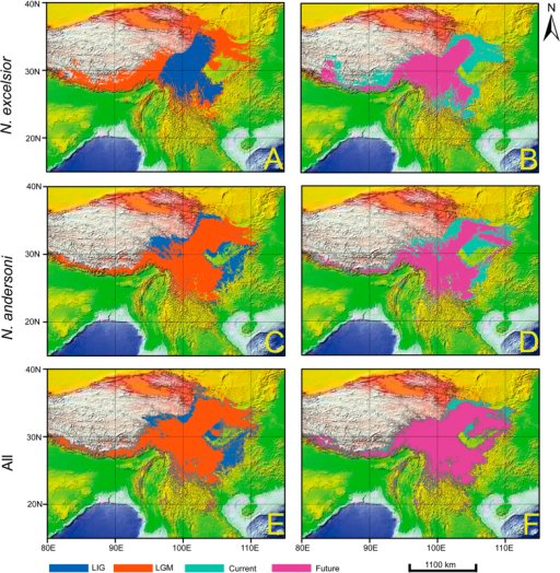 Ecological niche modelling of the NASC using 19 bioclimatic variables.The predicted potential distribution reclassified by MTPLT are given in different colors. The predicted potential distribution in different historical periods are mapped on the world topographic layer in ArcGis [9.0] (http://www.esri.com/software/arcgis/arcgis-for-desktop).