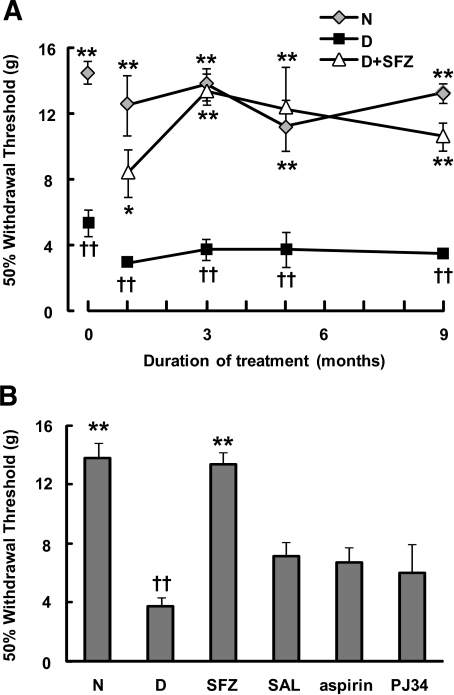 Sulfasalazine prevents the development of tactile allodynia in experimentally diabetic rats. A: Experimental diabetes in Lewis rats was induced by a single injection of streptozotocin as described in research design and methods. Diabetic rats (D) exhibited early signs of allodynia 4–7 days after streptozotocin injection, as indicated by the values shown at 0 time (representative of an independent evaluation of two separate sets comprising a total of 52 diabetic and 16 normal rats). Streptozotocin-induced diabetic rats were either left untreated or subjected to treatment with sulfasalazine (starting 6–10 days after streptozotocin injection) for up to 9 months (D+SFZ). B: Streptozotocin-induced diabetic animals were treated for 3 months with sulfasalazine, sodium salicylate (SAL), acetylsalicylic acid (aspirin), or PJ34. The presence of tactile allodynia was investigated at different time points (A) or after 3 months (B) by comparison with responses in normal animals (N) (n = 6–8 animals per group were used). Results are means ± SE of the averages of the 50% withdrawal thresholds measured on the left and right paw of each animal (see research design and methods). Significantly different from diabetic animals at *P < 0.05 and **P < 0.01. ††Significantly different from normal animals at P < 0.01, as calculated by Kruskal-Wallis' test followed by Dunn's test.
