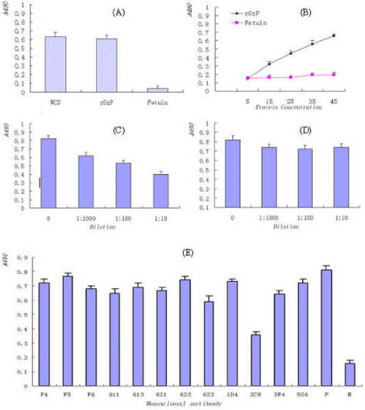 Characterization of purified rSzP protein binding to HEp-2 cells by ELISA. (A) Binding of biotinylated S. zooepidemicus whole cells, rSzP protein, and a fetuin control to HEp-2 monolayers. (B) Dose-dependent binding of rSzP to HEp-2 cells. (C) Inhibition of S. zooepidemicus binding to HEp-2 monolayers following pretreatment of bacteria with rabbit polyclonal anti-SzP antibodies. (D) No inhibition of HEp-2 binding with control rabbit serum. (E) Inhibition of S. zooepidemicus binding to HEp-2 monolayers following pretreatment of bacteria with monoclonal antibodies against SzP. For all experiments, absorbance values are means from representative experiments performed in triplicate. Error bars show the range of absorbance values.