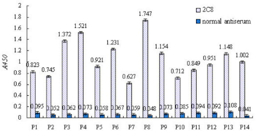 ELISA reactivities of 14 phage clones (P1–P14) with mAb 2C8 and normal antiserum. ELISA experiments are described in the Materials and Methods. In all experiments, absorbance values are means from representative experiments performed in triplicate. Error bars show the range of absorbance values.