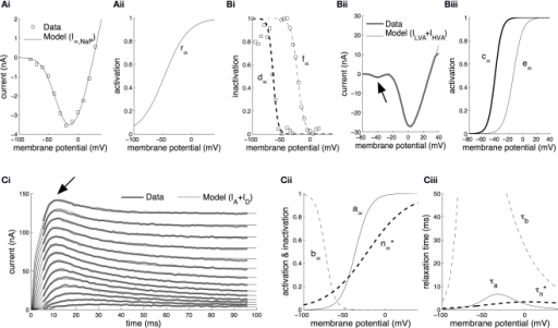 Parameter estimation from voltage-clamp data. (A) Estimation of the steady-state activation of the persistent sodium current. Persistent sodium currents at equilibrium, I∞,NaP, were measured at the end of 800 ms-long voltage steps to membrane potentials in the range from −90 to +30 mV from a holding potential of −110 mV (Ai, open squares; Nikitin et al., 2006). The model for I∞,NaP (Eq. S11 in section Materials and Methods in Supplementary Material) was fitted against this data (Ai, solid line) permitting the estimation of the steady-state activation of the current, r∞, as a sigmoid function of the membrane potential (Aii). (B) Estimation of the steady-state activation and steady-state inactivation of the low-voltage-activated and high-voltage-activated calcium currents. The steady-state inactivation for ILVA, d∞, was computed by fitting a sigmoid curve to normalized peak currents recorded during voltage steps to −50 mV from holding membrane potentials between −100 mV and −30 mV (Bi, open squares; Staras et al., 2002). Similarly, for the steady-state inactivation of IHVA, f∞, we fitted a sigmoid curve to normalized peak currents recorded during voltage steps to 0 mV from holding membrane potentials between −60 mV and +15 mV (Bi, open circles; Staras et al., 2002). Subsequently, the model in Eq. S12 in Supplementary Material was fitted against the total calcium current induced during a voltage-ramp protocol changing the membrane potential from −100 mV to +30 mV over a time interval of 120 ms (Bii; Staras et al., 2002). The arrow in Bii indicates the low-voltage-activated component corresponding to ILVA. From the fitted model, we derived the steady-state activation for ILVA and IHVA (c∞ and e∞, respectively) as sigmoid functions of the membrane potential (Biii). (C) Estimation of the activation and inactivation kinetics for the transient (IA) and delayed-rectifier (ID) potassium currents. The model for the total potassium current under voltage-clamp (Eq. S13–S16 in Supplementary Material) was fitted to current traces induced during 100 ms-long voltage steps from a holding membrane potential of −90 mV to steps from −20 to +35 mV (Ci; Staras et al., 2002) using the full trace method (Willms et al., 1999). The arrow in Ci indicates the early transient component corresponding to IA. The fitted model permitted the estimation of the steady-state activation, a∞, and inactivation, b∞, for the transient potassium current IA, and the steady-state activation, n∞∗, for the delayed rectifier as illustrated in Cii. The corresponding relaxation times, τa, τb and , were also derived from the fitted model (Ciii). The estimated kinetic parameters for ID are marked with an asterisk, because they are further modified and receive their final values based on current clamp data.