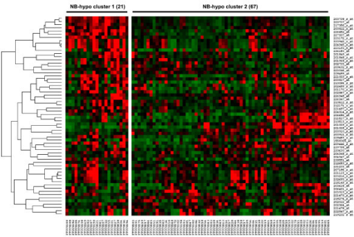 Heatmap of the 62 probesets in the 88 neuroblastoma tumors. The expression data for each individual probeset have been scaled and are represented by pseudo-colors in the heatmap. Red color corresponds to high level of expression and green color corresponds to low level of expression. The 88 patients (columns) were divided into two groups by k-means clustering. Cluster 1 consists of 21 patients and cluster 2 consists of 67 patients. The expression values of the 62 probesets were grouped by hierarchical clustering (rows). Hierarchical clustering dendrogram is on the left and the corresponding probesets on the right.