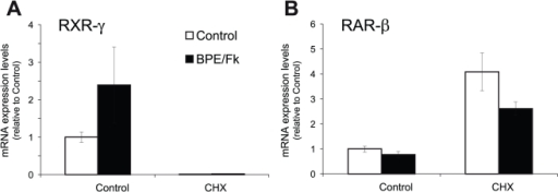 Protein synthesis inhibition abrogates RXR-γ, while increasing RAR-β mRNA steady state mRNA levels.SCs were treated with the axonal mimickers forskolin and BPE for 24 hours in the presence or absence of 10 µg/ml of the protein synthesis inhibitor cycloheximide (CHX), and RXR-γ (A) and RAR-β (B) mRNA levels were determined by Q-RT-PCR. All values are shown as the mean ± SEM relative to their respective controls in the absence of cycloheximide.