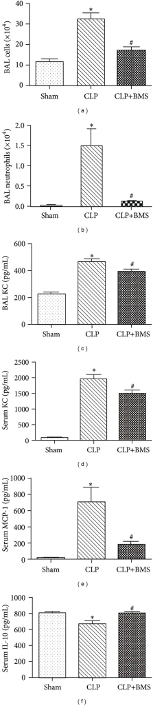 NF-κB inhibition reduces lung inflammation after CLP. (a) Total cells, (b) neutrophils, and (c) KC levels in BAL at 24 hours after surgery in control mice treated with sham laparotomy (Ctrl), mice that underwent CLP followed by vehicle (CLP), and mice treated with CLP followed by BMS-345541 (CLP+BMS). N = 10 per group. *P < 0.05 for CLP versus sham laparotomy controls (Ctrl); #P < 0.05 for CLP+BMS versus CLP. (d) Serum cytokine levels for KC, MCP-1, and IL-10 at 24 hours after surgery. N = 5 per group. *P < 0.05 for CLP versus Ctrl; #P < 0.05 for CLP+BMS versus CLP. Results are presented as mean ± SE.