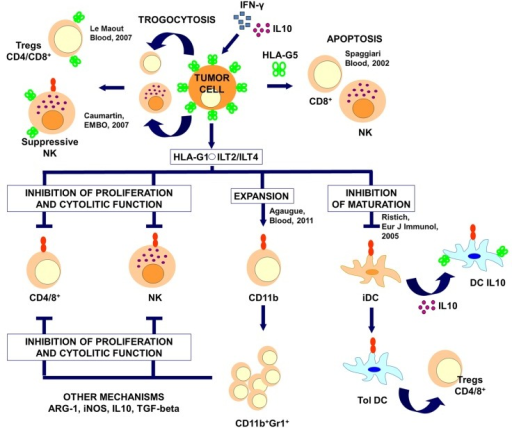 the evolution and mechanism of immunological Cancers grow and spread by a process akin to evolution.