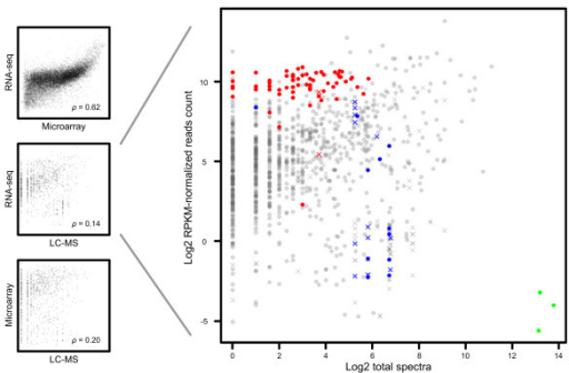 Correlation between mRNA and protein detection signals. Plots of transcript and protein detection levels for 963 genes detected by all three technologies (left). Every point represents a gene annotation. Correspondence is expressed by Spearman's correlation coefficients (ρ). In the detailed view of the mRNA abundance assayed by RNA-seq versus protein abundance (right), three categories of proteins/transcripts that do not conform to the overall correlation trend are highlighted: ribosomal (red, GO cellular component ribosome), histones (blue, based on gene descriptions) and vitellogenins (green, based on gene descriptions). Crosses are multiple gene matches (one protein/many genes or many proteins/many genes).