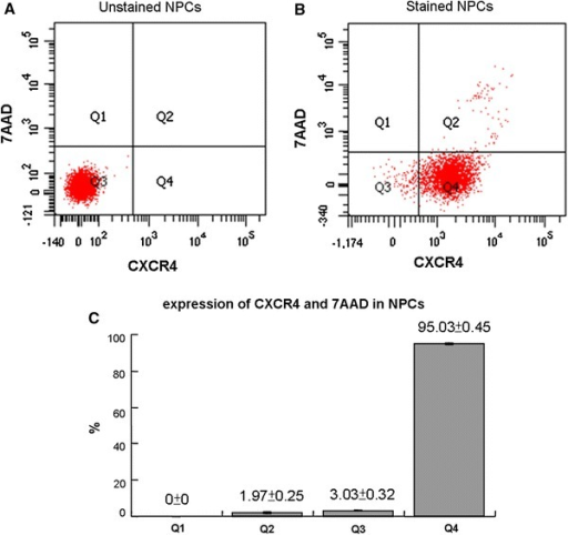 CXCR4 expression in NPCs verified by flow cytometry. a Gating for positive or non-fluorescence was done on unstained NPCs. The levels of the fluorescence were minimal. b The majority of the NPCs stained with the CXCR4 antibody and 7AAD fell within Q4 (CXCR4+/7AAD−). c More than 95 % of the NPCs were viable and CXCR4 positive. The values are expressed as mean ± standard deviation