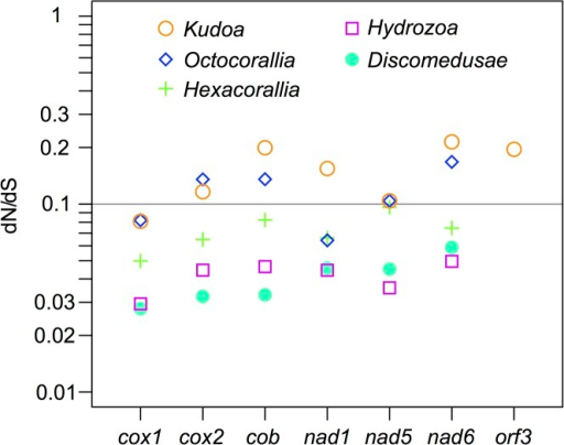 The relative rates of nonsynonymous and synonymous substitutions in mitochondrial-encoded protein genes, compared among the genus Kudoa and other cnidarian classes.