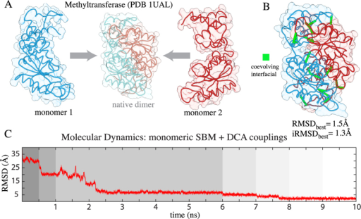 Inferring dimerization complexes with coevolutionary pairings.(A) Two monomeric structures of the tRNA methyltransferase are used in a molecular dynamics simulation that brings the molecules together until reaching a stable complex close to the native homodimer state (shown in the center with light colors). (B) Accurate complex formation is driven by the dimeric constraints (shown in green) extracted using DCA. This methodology seems robust to the existence of those non-dimeric contacts that are used as constrains from DCA. (C) The RMSD progression of the simulation shows how at different stages of the protocol (shown in different background colors) the procedure gets closer to the native structure. At each stage the equilibrium distance and the shape of the Gaussian function are parameterized (See Supplementary Methods) to facilitate the satisfiability of the DCA couplings. For example, the contact range starts at 50 Å and concludes at typical native distances of 8 Å. This figure is representative of all the systems investigated here. For other RMSD progression plots refer to Supplementary Fig. S1.