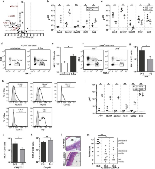 IL-18 enhances the recruitment of NK cells into the infected cecum LP thereby stimulating early cecal inflammation.(a) Il18-/- mice and littermate controls were Sm-pretreated, infected orally with 5x107 CFU S.Tm for 12h (n = 3–4 per group). RNA-Seq was performed on RNA extracted from complete cecum tissue. RNA-Seq analysis: The Volcano plot shows the induction (log2 fold change) versus the -log10 p-value for all chemokines. Chemokines able to induce NK cell recruitment are highlighted in red. (b) C57BL/6 WT mice were Sm-pretreated and either uninfected or infected orally with 5x107 CFU S.Tm for 12h (n = 4 per group). Cxcl9, Cxcl10, Cxcl11, Ccl3 and Ccl4 mRNA levels in whole cecum tissue were measured by RT-qPCR. Results are presented relative to the expression of Actb. (c) Same as (b) but comparing cecum tissues from infected Il18-/- mice vs infected littermate controls. (d and e) Flow cytometric analysis of isolated cecal LP cells from Sm-pretreated C57BL/6 WT mice, either uninfected or infected with 5x107 CFU S.Tm (n = 5 per group). Single live cells were gated on CD45+ lymphocytes. (d) Representative dot plots and (e) quantification of NK1.1+ CD3- cells. (f and g) Flow cytometric analysis of isolated cecal LP cells from Il18-/- mice and littermates, Sm-pretreated and orally infected with 5x107 CFU S.Tm for 12h (n = 5–6 per group). Single live cells were gated on CD45+ lymphocytes. (f) Representative dot plots and (g) quantification of NK1.1+ CD3- cells. (h) C57BL/6 mice were infected for 12h with 5x107 CFU S.Tm and isolated cecal LP cells of two mice were pooled for staining and isotype control staining; data are shown for one out of three independent experiments. CD45+ NK1.1+ CD3- cells were characterized according to their surface expression of KLRG1, NKp46, CD122, TCRγδ and Thy1. (i) C57BL/6 mice were infected for 18h with 5x107 CFU S.Tm. Isolated cecal LP cells of two mice each were pooled for fluorescence activated cell sorting. Live CD45+ CD3- cells were further sorted according to their expression of NK1.1. Tbx21, Eomes, Rorc, Gata3, Prf1 and Sell transcripts were analyzed by RT-qPCR. Results are presented relative to the expression of Actb. (j and k) Flow cytometric analysis of isolated cecal LP cells from Sm-pretreated (j) Casp1/11-/- or (k) Casp11-/- mice. Single live cells were gated on CD45+ lymphocytes and NK1.1+ CD3- cells were quantified. (l and m) C57BL/6 WT mice were injected intraperitoneally with anti-asialo GM1 antiserum (50μL antiserum/mouse; three consecutive days), anti-NK1.1 (10mg/kg; 2 consecutive days) or PBS and mice were infected orally with 5x107 CFU S.Tm for 12h (n = 8–10 per group). (l) HE-stained cryosections of anti-asialo GM1 -treated or control mice, (m) pathological score; arrows indicate mice of representative HE-stained cryosections; SE = submucosal edema, L = lumen; scale bar = 100μm. Statistical analysis was performed using the Mann-Whitney-U test (ns = not significant, * = p<0.05; ** = p<0.01).