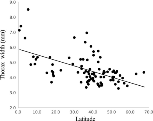 Thorax Width as a function of latitude for 91 bumblebee species. Ordinary least squares regressions fitted are shown for illustrative purposes. Bumblebees exhibit the converse to Bergmann's rule: The largest species are found in lower latitudes.