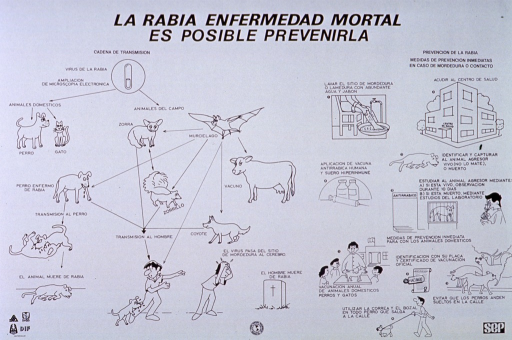 <p>White poster with black lettering.  Title at top of poster.  On the left side, poster deals with how rabies is transmitted through animals to man and its progression to death.  Illustrations include dogs in different stages of illness, other animals such as bats, squirrels, and cows, a man being bitten by a dog, a man clutching his head, and a gravestone.  On the right side, the poster addresses the treatment and prevention of rabies.  Illustrations of treatment include a leg being washed, a health center, a dog lying down, bottles of vaccine and a syringe.  Illlustrations of prevention with animals include a dog receiving a shot, a certificate of vaccination, a group of dogs socializing (to be avoided), and a dog being taken for a walk while on a leash and wearing a muzzle.</p>