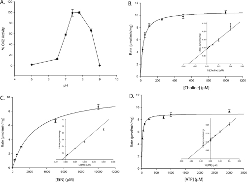 Kinetic analysis of TbC/EK2(A) CK activity was measured spectrophotometrically as a function of pH as described in the Experimental section. Results are means±S.D. of three measurements. (B–D) Determination of TbC/EK2 Michaelis–Menten constants for choline, ethanolamine and ATP (insets are Lineweaver–Burk plots). ATP concentration was held constant (5 mM), while choline (B) or ethanolamine (EtN) (C) concentrations were varied. (D) Choline concentration was held constant (2 mM), while ATP concentration was varied.