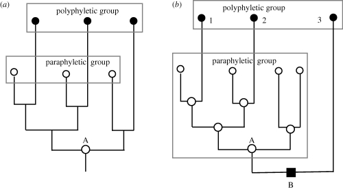 Contrasts between paraphyletic (ancestral) and polyphyletic groups. (a) The special case used by Hennig (1974) to claim that there is no cladistic difference between them because both have the same common ancestor (A) and an identical ancestral branching pattern. (b) A more realistic case where the three black-circle taxa do not have the same last common ancestor as the white-circle group, but have a different last common ancestor (B) which also has a different phenotype (black square) from A and from themselves. Case (b) shows that Hennig's claim for cladistic equivalence between paraphyletic and polyphyletic taxa lacks generality and rested on a cunningly chosen exceptional example. A paraphyletic group includes its last common ancestor and a polyphyletic one does not, a key fact partially concealed by Hennig misleadingly putting the same-sized box around both groups; to have correctly represented paraphyly the lower box should have included A, as it does in (b), where the obvious monophyly (single origin) of the paraphyletic white-circle taxon is much clearer than in Hennig's tendentious figure. The figure on the right also more strongly makes the point that the difference between polyphyly and paraphyly lies in the shared defining character (white circle) of the paraphyletic group having had a single origin, whereas the shared defining character of the polyphyletic group had three separate origins, i.e. a strongly contrasting phylogenetic history. Moreover, in (b) taxa 1 and 2 evolved black circleness in parallel from separate but phenotypically similar white-circle ancestors, whereas taxon 3 evolved it convergently from a cladistically and phenotypically more distinct black-square ancestor. It should be obvious that classifying white-circle taxa together is phylogenetically sound, i.e. they have a shared white-circle history, whereas classifying the black-circle ones together is unsound—being strongly contradicted by the lack of shared black-circle history. Unlike (a), (b) is a proper phylogeny with all ancestors and phenotypes shown; ignoring ancestral phenotypes makes nonsense of phylogeny. Cladistic aversion to paraphyletic groups, and lumping of paraphyly and polyphyly as 'non-monophyly', are logically flawed and anti-evolutionary (see also Cavalier-Smith (1998) which explains that clades, grades and taxa are all useful but non-equivalent kinds of group and that all taxa need not be clades and all clades need not be taxa).
