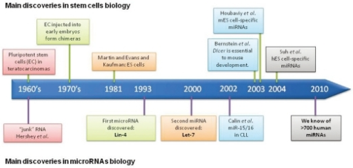 Timeline showing the main discoveries in stem cell biology and miRNA research. miRNA, microRNA.