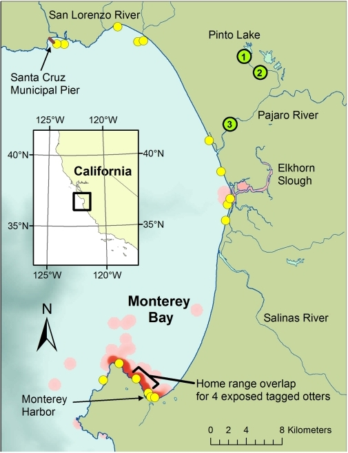 Map Of Monterey Bay Showing Distribution Of Sea Otters Openi - Monterey on us map