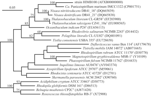 Phylogenetic tree based comparisons between 16S rRNA gene sequences from strain HIMB100, Candidatus Puniceispirillum marinum IMCC1322, and type strains of related species within the family Rhodospirillaceae. Sequence selection and alignment improvements were carried out using the 'All-Species Living Tree' project database [21] and the ARB software package [22]. The tree was inferred from 1,206 alignment positions using the RAxML maximum likelihood method [23]. Support values from 100 bootstrap replicates, determined by RAxML [24], are displayed above branches if larger than 60%. The scale bar indicates substitutions per site.