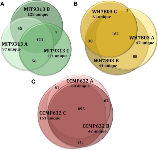 Venn diagrams showing the degree to which triplicate cultures of representative phytoplankton strains share DOMP features. Each culture is represented by a circle, the area of which is proportional to the total number of features identified in that sample. The degree of overlap between circles is proportional to the number of shared features. Prochlorococcus str. MIT9313 replicates had the most variation of any strain tested (A), while P. tricornutum (CCMP632) replicates had the least variation (C). Synechococcus str. WH7803 replicates exhibited an average degree of variation indicative of most strains tested in this study (B). For more detailed information regarding replicate correlations, see Table 3.