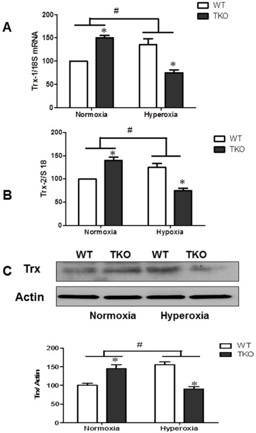 Deletion of TXNIP decreases thioredoxin levels under hyperoxic conditions.WT and TKO mice were subjected to 5 days hyperoxia (p7–12). Retinas were collected for protein and mRNA levels of thioredoxin (cytoplasmic Trx-1) (A) as well as mitochondrial Trx-2 (B) and total thioredoxin protein (C). A 2×2 analysis showed a significant interaction between gene (TKO) and oxygen levels (Hyperoxia) in both Trx-1 and Trx-2 as well as Trx total expression. Exposure of TKO pups to hyperoxia significantly decreased the anti-apoptotic thioredoxin on both mRNA as well as protein level compared to WT. (#P<0.05 Hyperoxia vs Normoxia, *P<0.05, TKO vs WT, n = 4–6).