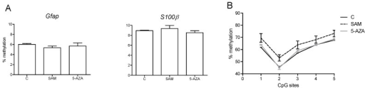 DNA methylation analysis of the Gfap and S100β genes in cultured NPCs treated with SAM and 5-AZA. (A) The methylation level of the CpG sites at position –429 in the Gfap promoter and –276 in the S100β promoter. (B) The methylation level of five CpG sites at positions 8, 14, 29, 32 and 49 in Gfap exon 1. (n = 2 different well cultures per treatment).