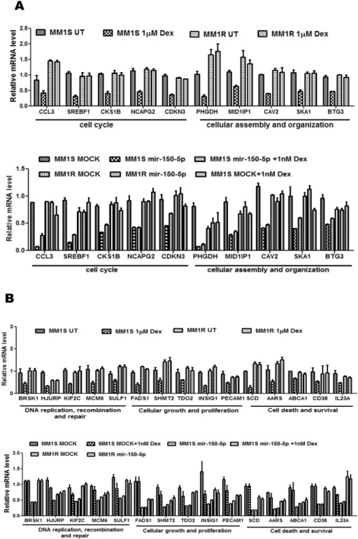 Mir-150-5p specific mRNA changes in MM1S are associated with pathways related to cell death and survival, cell cycle, cellular growth and proliferation (A–B)mir-150-5p specific mRNA regulation of the genes involved in (i) cell cycle, (ii) cellular assembly and organization, (iii) DNA replication, recombination and repair, (iv) cell growth and proliferation, (v) cell death and survival. Illumina BeadChip Gene Expression Array results are presented as bar graphs, reflecting mean of gene expression fold change from three independent experiments of MM1S cells, treated for 72 h with 1 µM Dex vs control cells (upper panels A–B), or else of MM1S cells transfected for 72 h with synthetic mir-150-5p versus mock transfection, treated for 72 h with 1 nM Dex or a combination thereof versus control samples (lower panels A–B).