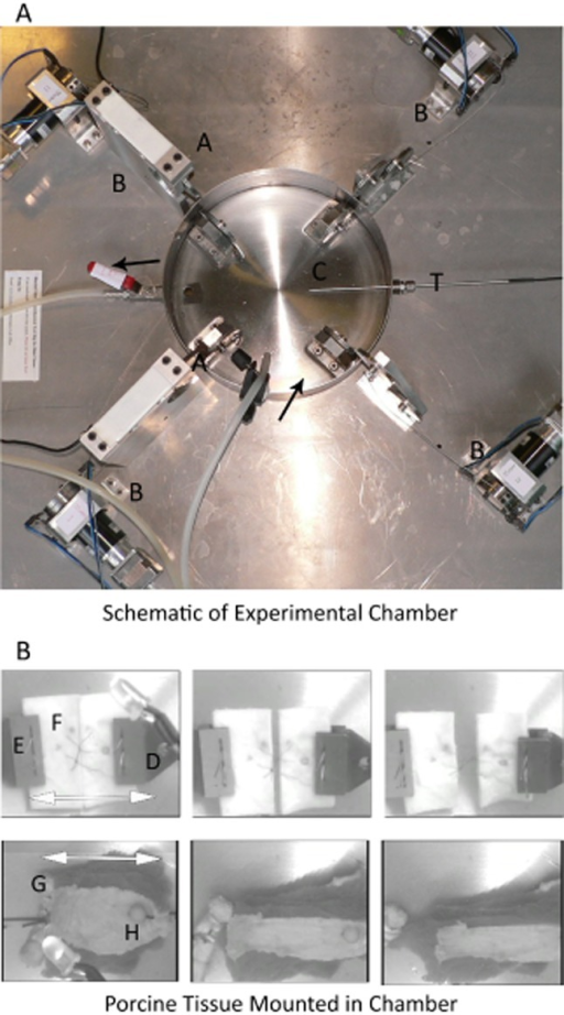 (A) In vitro experimental chamber: The chamber (C) is constructed from stainless steel and is mounted on a vibration-isolating platform. Two Load cells are positioned on perpendicular axes (A). Force is generated by activation of the stepper motors (B). Pregassed and warmed Krebs–Henseleit ringer is pumped into the chamber from a water bath (not shown) and circulates in the direction of the black arrows. The temperature of the chamber is constantly monitored by the retractable probe (T).(B) Mounted tissue. Upper three panels left to right: Cartilage samples are mounted in the chamber using steel clamps (D) and stress pins (E) in the orientation of axis I (white arrow). Reference points are marked onto the cartilage to allow displacement to be measured (F). The synchronizing light emitting diode is removed once triggered. Lower three panels left to right: Muscle samples are mounted in the chamber in a similar manner to cartilage samples. The joined tendon is in view (G). A sizing pin of known diameter is used as a reference point (H).