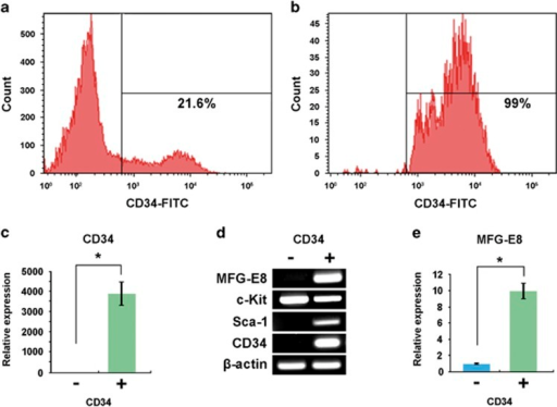 Expression of milk fat globule-EGF-factor 8 (MFG-E8) in CD34+ cells in the fetal liver. (a and b) Flow cytometric analysis of CD34+ cells in the developing liver before (a) and after (b) purification with anti-CD34 antibody. (c) quantitative PCR (qPCR) analysis of sorted cells for the expression of Cd34. Cd34 expression in the CD34+ fraction was presented as relative expressions (fold changes) over CD34− fraction after normalization to β-actin expression. *P<0.05. (d and e) real-time reverse transcription-polymerase chain reaction (RT-PCR) (d) and qPCR (e) analyses of sorted CD34+ and CD34− fractions for the expression of Mfg-e8. Note that only a CD34+ fraction expresses Mfg-e8. P<0.05. Mfg-e8 expression in the CD34+ fraction was presented as relative expressions (fold changes) over CD34− fraction after normalization to β-actin expression.