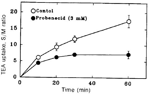 Time course of TEA uptake by renal cortical slices in the hresence and absence of 3 mM probenecid. Each point represents the mean ± SE of three experiments.