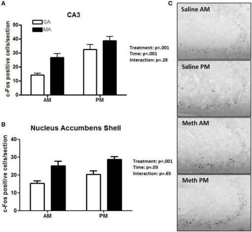 Brain areas that showed effects of treatment and time. In the CA3 (A) and NACs (B), MA and time affected the number of c-Fos positive cells and no MA × time interaction was seen. Representative images for neuronal activation in the CA3 following saline or MA exposure in the day and night are shown in (C). n = 10 mice/treatment/time period.