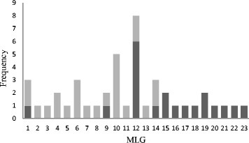 Frequency distribution of multilocus genotypes (MLGs) of Cryptosporidium parvum identified in 118 samples from 19 farms in Scotland (light grey) and 20 farms in Cheshire (dark grey)