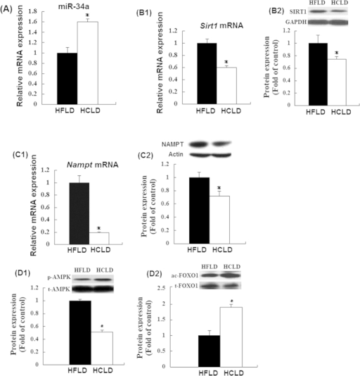Relative expression of hepatic miR-34a, mRNA and protein levels of NAMPT and SIRT1, and proteins level of Ac-FOXO1 and AMPK.(A) Hepatic miR-34a was quantified by real-time quantitative PCR. U6 was used as controls; (B–D) mRNA and protein expression of SIRT1 NAMPT and SIRT1, and proteins level of Ac-FOXO1 and AMPK in liver tissue were determined by real-time quantitative PCR(mRNA level) and western blot (protein expression) respectively. Actin or GAPDH was used as controls. Values expressed as mean ± standard error of the mean (SEM), n = 12 for each group except for the determination of FOXO1 and AMPK, and sample number is 7 and 6 for HCLD group and HFLD respectively. t-test was performed to detect the difference between two groups. *indicated the significant difference between two groups, P < 0.05.