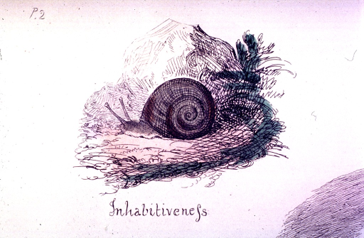 <p>A snail is inside its shell.</p>