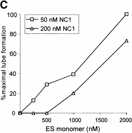 Autoregulatory inhibition of c18 NC1 by the cleavage product ES monomer. (A) ES monomer inhibits motility induced by c18 NC1 or hES dimer. Left panels, HUVEC tubules on Matrigel for 12 h were treated with ES dimer (50 nM) or NC1/ES trimer (75 nM) for 24 h after 30-min preincubation with human ES monomer (3,000 nM) as appropriate, followed by phase–contrast microscopy (magnification ×40). B, PC12 cells were plated on Matrigel in the presence of ES dimer (50 nM) or NC1/ES trimer (75 nM) for 20 h with or without 30-min preincubation with human ES monomer (3,000 nM) as appropriate, followed by phase–contrast microscopy (magnification ×200). Similar results were obtained with treatment with factors after 12–16-h culture on Matrigel. (C) Dose-dependent reversal of c18 NC1 inhibition of HUVEC tube formation by ES monomer. Increasing concentrations of hES monomer were added to freshly seeded HUVECs on Matrigel, followed after 30 min by addition of c18 NC1 (50 or 200 nM) and quantitation of tube formation after 16 h. Higher concentrations of ES monomer were required to reverse inhibition by 200 nM as opposed to 50 nM NC1. (D) Stimulation of MAPK by c18 NC1 or ES dimer is inhibited by ES monomer. HUVEC tubules on Matrigel for 16 h were preincubated with 3,000 nM hES monomer or PBS for 30 min as appropriate, followed by stimulation with hNC1 or hES dimer (50 nM) for 24 h and Western blotting with anti–phospho- MAPK antibody.
