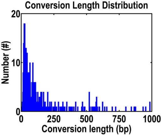 Distribution of gene conversion regions in the rice genome. Sixty-nine percent of all regions are shorter than 100 nucleotides. The number of conversions decreases as conversion length decreases.