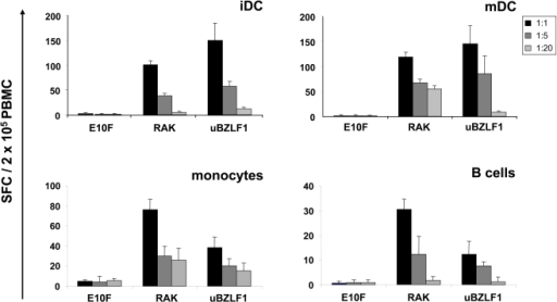 iDC, mDC, monocytes and B cells are capable to process uBZLF1 for epitope-presentation to CTL.iDC, mDC, monocytes, and B cells from EBV-seropositive, HLA B8-positive individuals were incubated for 2 h with 10 µg/ml uBZLF1, RAK or the E10F control peptide, washed and co-cultured with autologous PBMC at the indicated ratios. Numbers of positive cells were determined by ELISpot. The data show mean SFC values+s.d. of 5 replicate stimulations and are representative for 3 independent experiments with different donors.