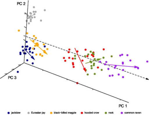 Multivariate regression of shape variables on log centroid size. Three-dimensional plot of the principal component scores. The colored lines are intraspecific regressions of the shape coordinates on log centroid size and thus estimate allometry within species. The dashed line is the regression of shape coordinates on log centroid size over all species.