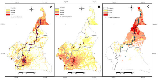 Habitat suitability maps of An. gambiae complex mosquitoes in Cameroon. Habitat suitability (HS) maps showing presence points (black dots) that were used for the ENFA for members of the An. gambiae complex in Cameroon. Habitat quality is classified in four classes of decreasing suitability: optimal (red), suitable (orange), marginal (yellow) and unsuitable (white). A: An. gambiae S form. HS map based on N = 328 presence points showing optimal (4.0% of the total study area), suitable (12.3%), marginal (25.3%) and unsuitable (58.4%) habitat. B: An. gambiae M form. HS map based on N = 80 presence points showing optimal (2.3% of the total study area), suitable (18.3%), marginal (34.7%) and unsuitable (44.7%) habitat. C: An. arabiensis. HS map based on N = 189 presence points showing optimal (5.6% of the total study area), suitable (22.0%), marginal (3.6%) and unsuitable (68.8%) habitat.