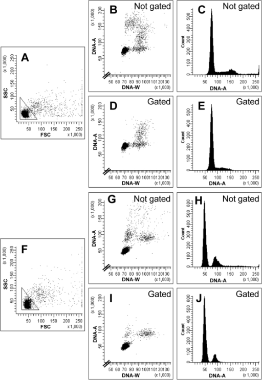 The importance of light-scatter gating.Flow cytometric analyses of a culture of exponentially growing S. pombe cells (top half) and cells arrested in G1 phase (bottom). The figure displays two-parametric light scatter cytograms (A, F), two-parametric DNA cytograms (B, D, G, I) and DNA histograms (C, E, H, J). Shown are the entire populations (A, B, C and F, G, H) and the remaining cells when gating has been introduced (D, E and I, J), thus removing cell doublets. The gates are shown in panels A and F.