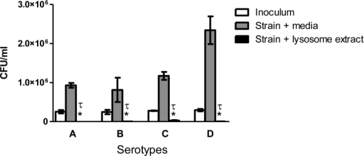 DC-derived lysosomal extract kills Cryptococcus in vitro.C. neoformans serotype A strain H99, C. gattii serotype B strain R265, C. gattii serotype C strain WSA87, and C. neoformans serotype D strain R4249 yeast cells at 2.5 x 105 cells/ml were incubated in phosphate buffer alone or in phosphate buffer with lysosomal extract for 24 h at 37°C, and CFU in the wells determined as described in Materials and Methods. White bars indicate inoculum, gray bars indicate cryptococcal cells incubated in phosphate buffer alone, and black bars indicate cryptococcal cells incubated with lysosomal extract. Data shown are means ± standard errors of the means (SEM) of the cumulative results of three independent experiments. An asterisk * indicates a significant difference compared to the results for the yeast incubated in phosphate buffer alone (P < 0.0001) and τ indicates a significant difference compared to the results for inocula (P < 0.0001).