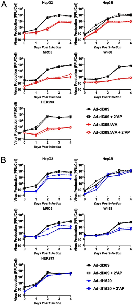 2′AP increases the replication of an adenovirus with an E1b-55K deletion but not with a VA-RNA deletion.Cells were infected in duplicate with (A) Ad-dl309ΔVA, (B) Ad-dl1520, or (A and B) Ad-dl309 at a multiplicity of infection (MOI) of 1 plaque forming unit per cell (PFU/cell) 1 hour prior to treatment with medium containing no drug or 2.5 mM 2′AP. Cells and media were harvested at 1 hr (day 0) as well as 1, 2, 3 and 4 days post-infection. Virus yields were determined using plaques assays on HEK293 cells. Error bars correspond to +/−SD.