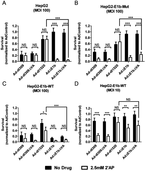 2′AP treatment increased both Ad-dl309 and AdΔE1b mediated HepG2 cell death.(A) parental HepG2, (B) HepG2-E1b-Mut and (C, D) HepG2-E1b-WT cells were infected with indicated viruses at MOI of 10 (D) or 100 (A, B, C) VP/cell and cultured in medium with or without 2.5 mM 2′AP. Survival was determined using an Alamar Blue assay 6 days post-infection. Fluorescence measurements were normalized to AdControl infected wells. Error bars correspond to +/−SD of quadruplicates (NS – Not Significant; ***p<0.001, **p<0.01, *p<0.05, one-way ANOVA).