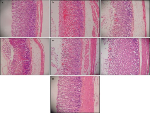 HE staining of the gastric tissue in rats (20×). (a) Normal control group. (b) Rats pretreated with carboxymethyl cellulose (CMC) (ulcer control). Disruption to the gastric epithelium, necrotic lesions penetrated deeply into the mucosa, extensive edema in the submucosal layer and leukocyte infiltration are apparent. (c) Rats pretreated with omeprazole (20 mg/kg). Mild disruption of the surface epithelium mucosa was present, but deep mucosal damage was absent. (d, e, f and g) The rats pretreated with 50, 100, 200, and 400 mg/kg Corchorus olitorius, respectively. There was no disruption to the surface epithelium and no edema or leukocyte infiltration into the submucosal layer.