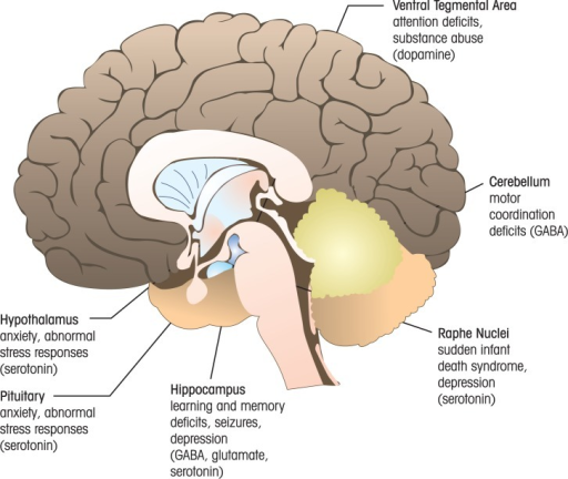 Examples of brain regions where chemical neurotransmitt open i examples of brain regions where chemical neurotransmitter system alterations have been demonstrated in models of fetal ccuart Images