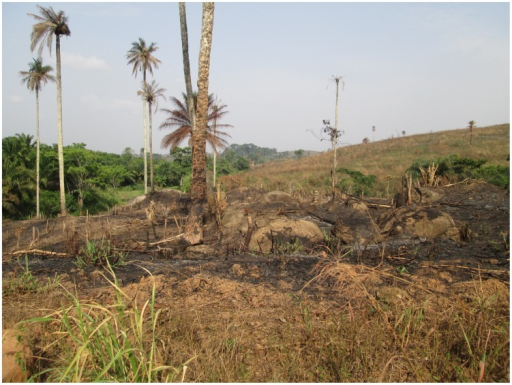 The area known as the Guinea Forest Region, now largely deforested because of logging and clearing and burning of the land for agriculture.Photo credit: Daniel Bausch.