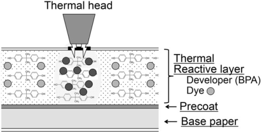 Schematic diagram of thermal receipt paper identifying the thermal reactive layer that contains BPA as a developer and a leuco dye, as well as stabilizers and binders (not shown).